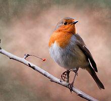 Rustic Robin by Krys Bailey