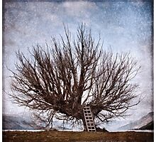 The Whomping Willow Tree Photographic Print
