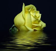Yellow Rose II by Sandy Keeton