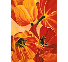 A Beautiful Bouquet - Tulips Photographic Print