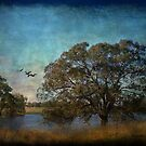 Fly away ... by Chris Armytage™