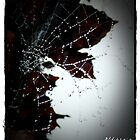 Misty Dew on Cobweb 3 by Alikat72