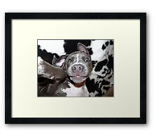 Silly, Baby, Blue Pit Bull Puppy Dog  Framed Print