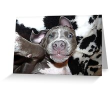 Silly, Baby, Blue Pit Bull Puppy Dog  Greeting Card