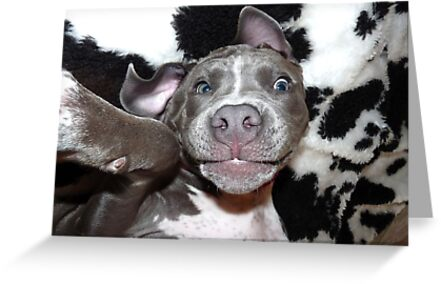 Silly, Baby, Blue Pit Bull Puppy Dog  by Christy Carlson