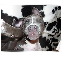 Silly, Baby, Blue Pit Bull Puppy Dog  Poster