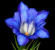 Black n Blue by barryforbes69