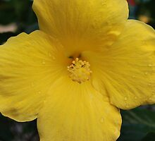 Hibiscous Chicago IL Mag Mile by zwrr16
