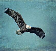 Soaring Bald Eagle by golfnut10