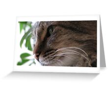 Mr. Kitty's face Greeting Card