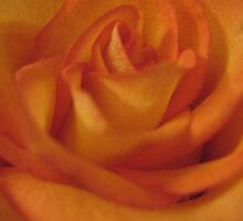 Juicy Fruit Rose by MarianBendeth