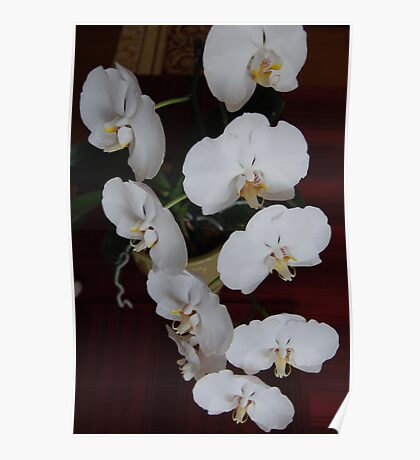 White Orchid I If you like, please purchase, try a cell phone cover thanks Poster