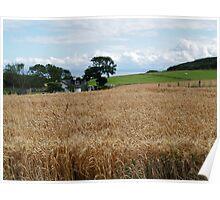 Fields of Barley 2 Poster