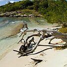 Drift Wood in Antigua by Memaa