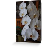Center Piece 3 White Orchid Art Greeting Card