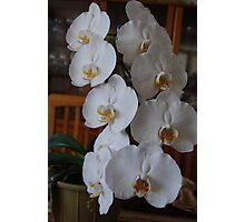 Center Piece 3 White Orchid Art Photographic Print