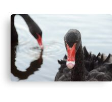 Swanning About Canvas Print