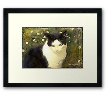 My days in the sun Framed Print