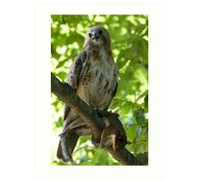 Red Tail and Fast Food Art Print