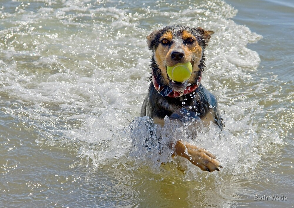 Fetch! Cleveland Qld Australia by Beth  Wode