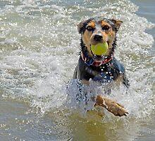 Fetch! Cleveland Qld Australia by Beth  Wode