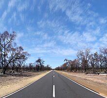 Homeward Bound by Emma Holmes