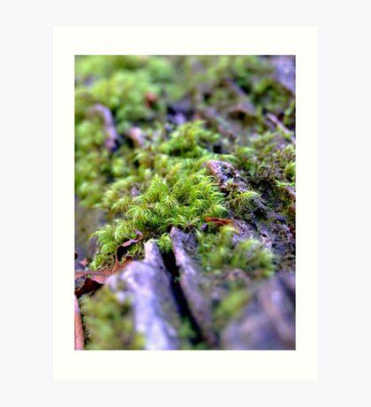 miniture forest Art Print