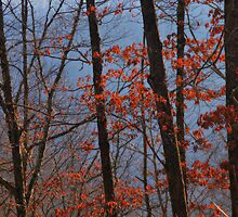 Morning Mist by Ann Eldridge