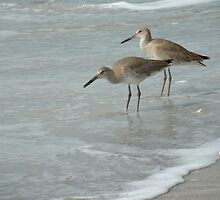 Willets by the Sea by Rosalie Scanlon