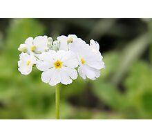 Flora Photographic Print