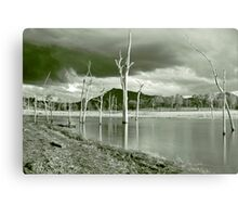 Ghost Tree Cove Canvas Print