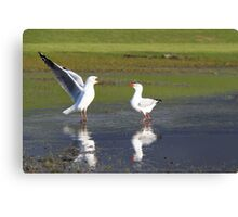 Golfing Gulls Canvas Print