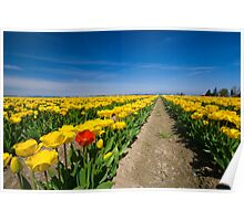 Tulip Rows Poster
