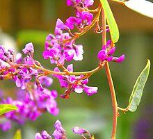 Happy Wanderer Creeping Flower by Emma Newman