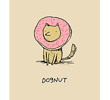 Dognut Photographic Print