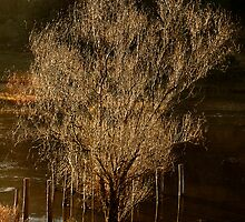 Willow Tree in Winter by Dianne English