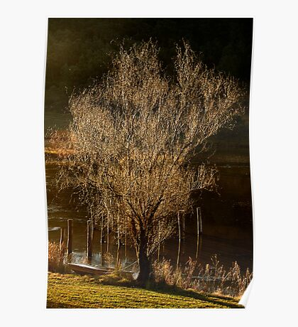 Willow Tree in Winter Poster