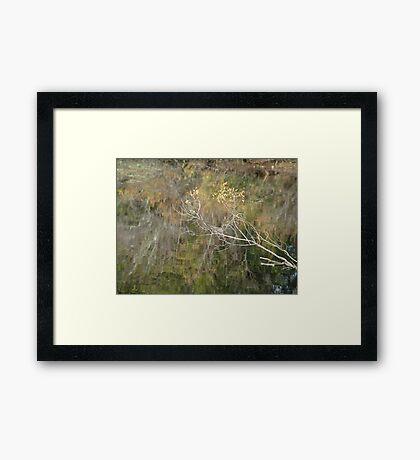 Little Branch Framed Print