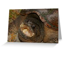 Florida Snapping Turtle Greeting Card