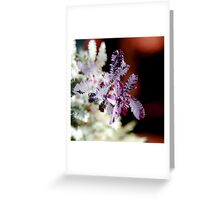 Purple Wattle Leaves Greeting Card