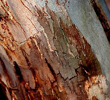 Gumtree Bark by Emma Newman