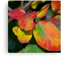 Rounded Coloured Leaves Canvas Print
