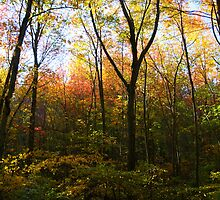 The Forest Changing Colours (Connecticut) by BGpix