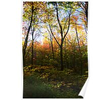 The Forest Changing Colours (Connecticut) Poster