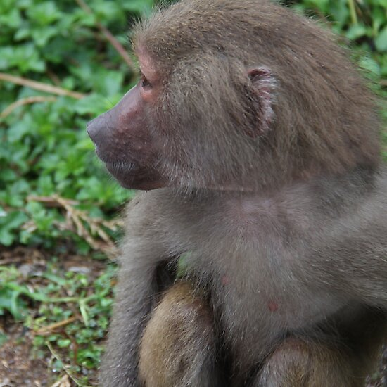 Monkey Business by Emma Holmes