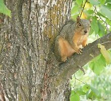 Squirrel in a Tree. by Mywildscapepics
