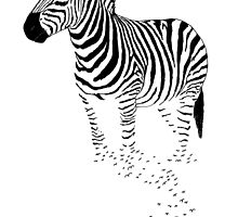 Zebra by jankoba
