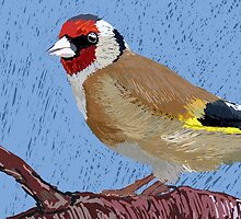 European Goldfinch by jankoba