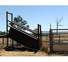 Cattle Roundup Photographic Print