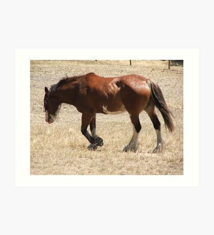 The Clydesdale Art Print